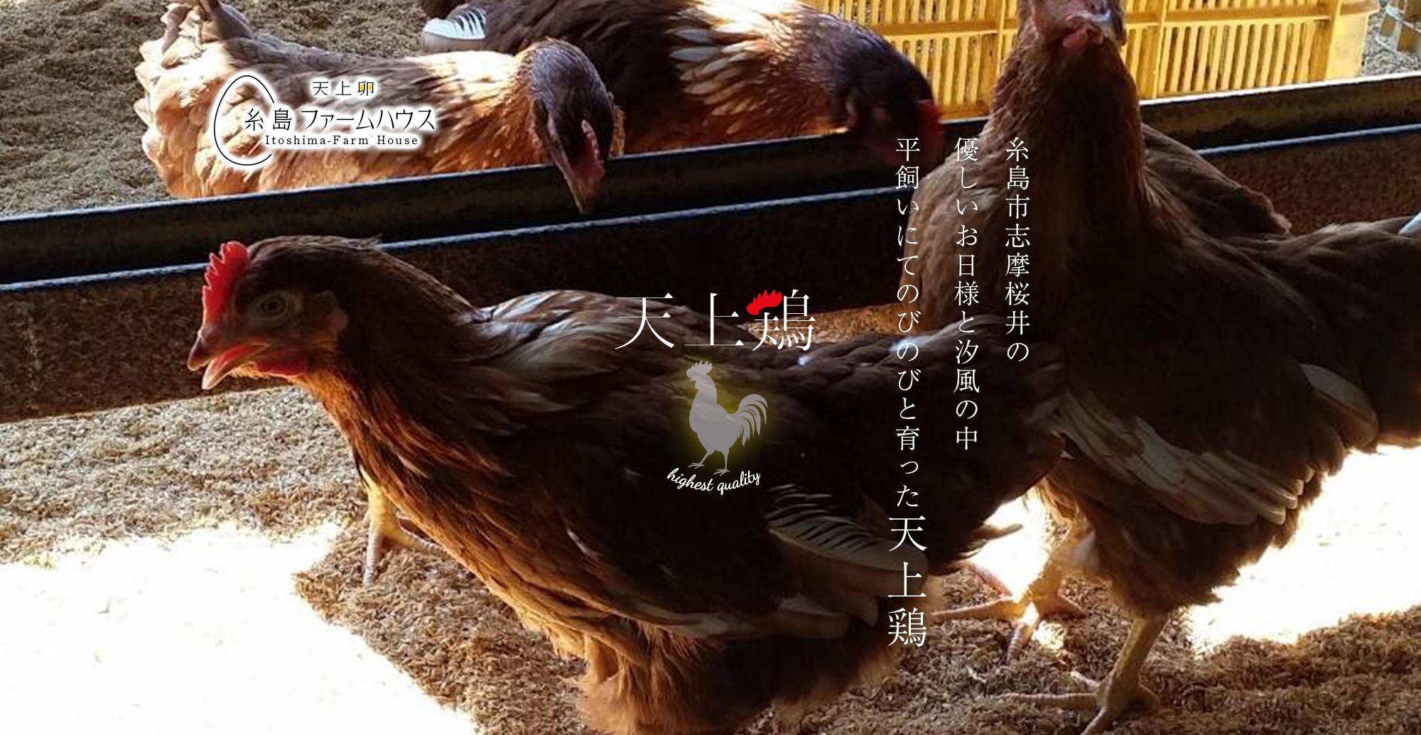 糸島市志摩桜井の優しいお日様と汐風の中、平飼いにてのびのびと育った天上鶏